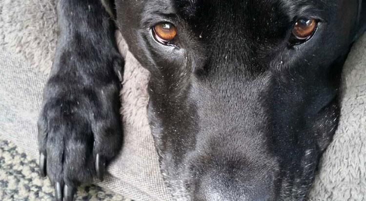 Pet Damaged Carpet Repairs